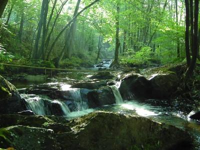Het riviertje de Hulle waarlangs een prachtige wandelroute loopt
