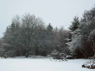 Besneeuwde tuin op 4 dec 08